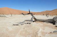 Individuele rondreis Namibië