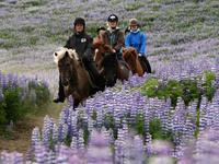 Paardrijden Lava Tour
