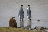 2022 19-Daagse expeditie Antarctica en de Falkland eilanden