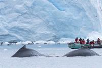 2021/22 12-Daagse expeditie Antarctica, Hoogtepunten van het bevroren continent