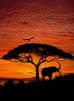 Komar Fotobehang National Geographic African Sunset 194x270 cm 4-501