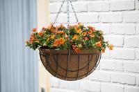 Nature Hanging Basket H16xØ30cm