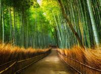 Fotobehang Bamboo 232 cm x 315 cm
