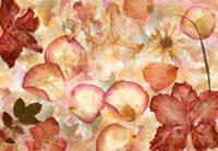 Dried Flowers Fotobehang 366x254cm