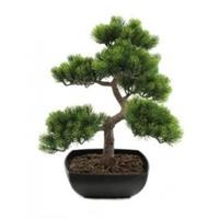 EUROPALMS Pine bonsai, 50cm