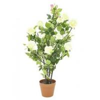 EUROPALMS Rose shrub, cream, 86cm
