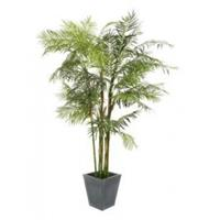 EUROPALMS Cycas Tube Palm, 280cm