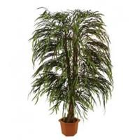 EUROPALMS Willow tree multi leaf, 215cm