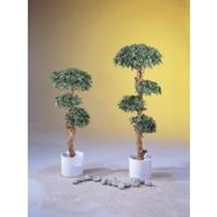 EUROPALMS Bonsai tree, 180cm