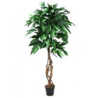 EUROPALMS Jungle tree Mango, 150cm
