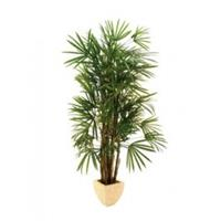 EUROPALMS Lady palm, 150cm