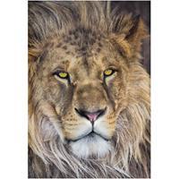 Praxis Fotobehang Lion
