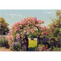 Praxis Fotobehang Rose garden