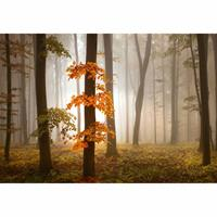 Fotobehang Foggy Autumn Forest