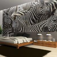 Fotobehang - Kudde zebra's , zwart wit