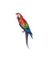 That's Mine - Wall Sticker Manuel The Parrot - Redish (O8050)