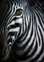PGM Jutta Plath - Zebra I Kunstdruk 60x80cm
