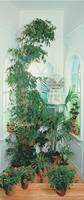 Papermoon Raam Vlies Fotobehang 90x200cm