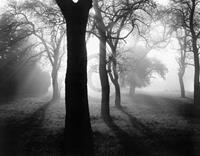 PGM Tom Weber - Bäume im Nebel I Kunstdruk 90x70cm