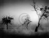 PGM Tom Weber - Bäume im Nebel II Kunstdruk 90x70cm