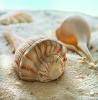 PGM Donna Geissler - Beach Shell III Kunstdruk 30x30cm