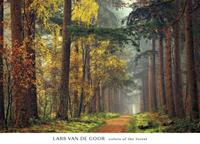 PGM Lars Van De Goor - Colours of the forest Kunstdruk 91x66cm