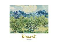 PGM Vincent Van Gogh - Landscapes with olive trees Kunstdruk 70x50cm