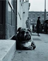 PGM Gay - Lazy Bulldog at Camden Town Kunstdruk 40x50cm