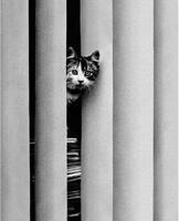 PGM Golbin - Curious Cat Kunstdruk 40x50cm