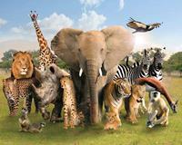 GBeye Wild World Poster 50x40cm