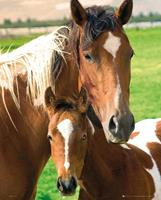 GBeye Horses Mare and Foal Poster 40x50cm