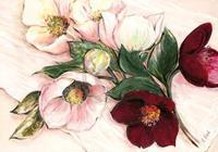 PGM Elisabeth Krobs - Elegant Anemones Kunstdruk 100x70cm