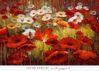 PGM Lucas Santini - Meadow Poppies II Kunstdruk 91x66cm