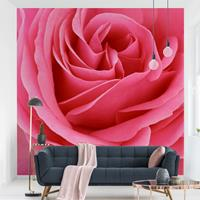 Home24 Vliesbehang Lustful Pink Rose, Bilderwelten