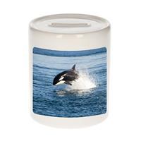 Bellatio Decorations Dieren orka foto spaarpot 9 cm jongens en meisjes - Cadeau spaarpotten orka vissen liefhebber