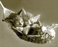 Pyramid Keith Kimberlin Kittens in a Hammock Poster 50x40cm