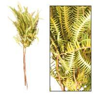 Leen Bakker Droogbloemen Fern Barranco - bruin - 60 cm