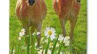 Good Morning Strandlaken Horses - 75 x 150 cm - multicolour