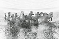Wizard+Genius White Horses Vlies Fotobehang 384x260cm 8-banen