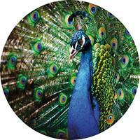Wizard+Genius Beautiful Peacock Vlies Fotobehang 140x140cm rond