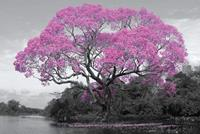 GBeye Tree Blossom Poster 91,5x61cm