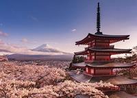 Pyramid Mount Fuji Blossom Poster 140x100cm