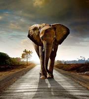 Dimex Walking Elephant Vlies Fotobehang 225x250cm 3-banen