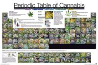 Periodic Table of Cannabis Poster 91,5x61cm