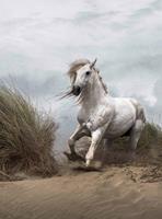 Wizard+Genius White Wild Horse Vlies Fotobehang 192x260cm 4-banen