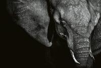 Wizard+Genius Beautiful Elephant Vlies Fotobehang 384x260cm 8-banen