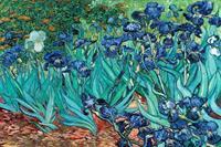 Van Gogh Les Irises Poster 91,5x61cm