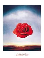 Salvador Dali - Rose meditative Kunstdruk 60x80cm